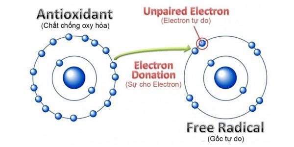 Quá trình loại bỏ gốc tự do từ chất chống oxy hóa